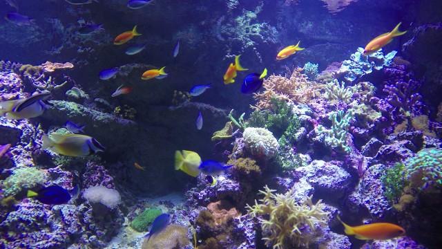 Fish in the tank